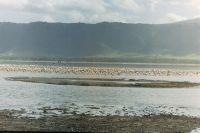 033 - Flamingos im Lake Magadi
